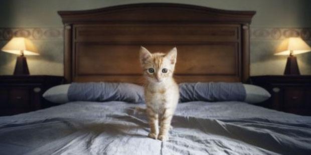 kedi sahibi